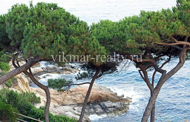 Мыс Punta d'en Rosaris в Ллорет де Мар