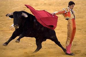 Коррида феерическое незабываемое представление в Испании